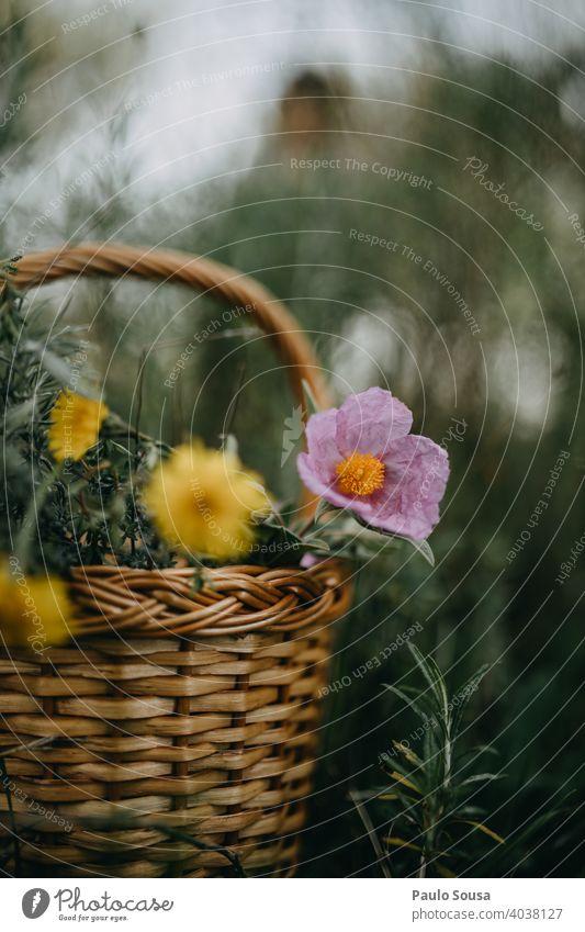 Korb mit wilden Frühlingsblumen Frühblüher Frühlingsgefühle Natur Farbfoto Blume Pflanze Außenaufnahme Blüte Tag Frühlingstag Garten natürlich Textfreiraum oben