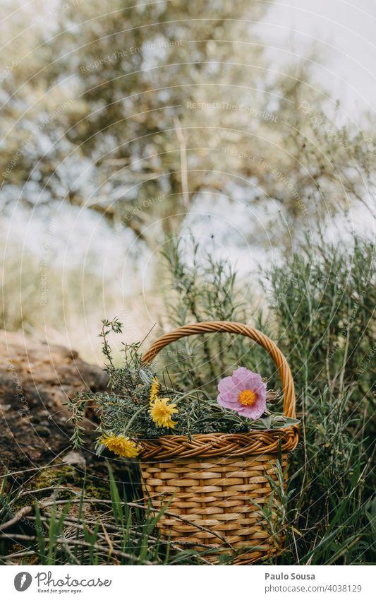 Korb mit wilden Frühlingsblumen Textfreiraum oben Farbfoto Frühlingsgefühle Frühblüher Blume Pflanze Natur Blüte Außenaufnahme Menschenleer Blühend Tag