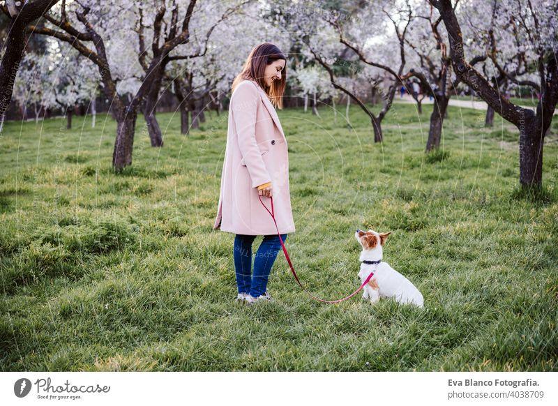 kaukasische Frau und Hund im Park im Frühling bei Sonnenuntergang. Liebe und Freundschaft Konzept. Haustiere im Freien jack russell Parkfeder Blumen