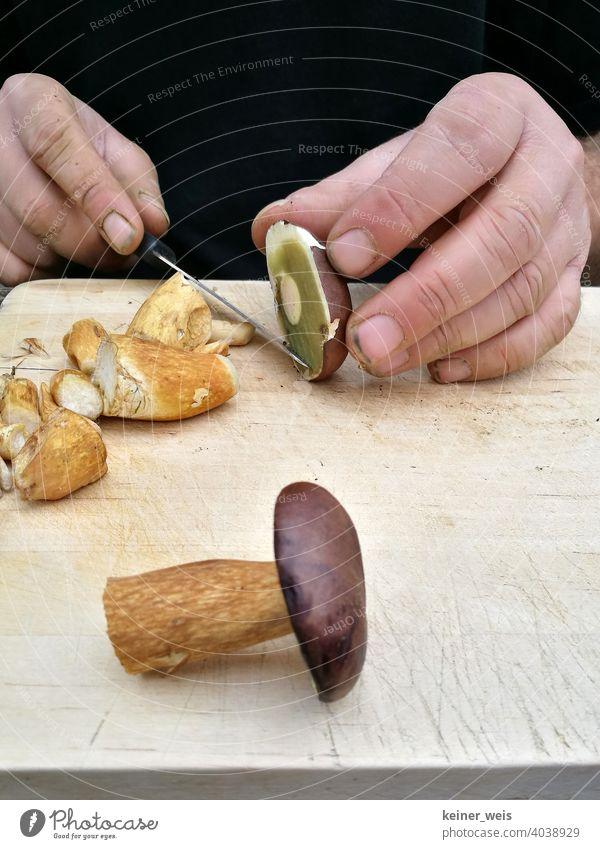 Schmutzige Hände schneiden Maronen-Röhrlinge mit einem Messer für ein leckeres Pilzgericht Pilze Speisepilz Natur Herbst essbar Lebensmittel Ernährung frisch