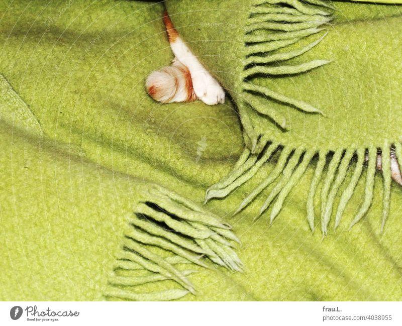 Ein Kater und seine alte, verfilzte Lieblingsdecke Katze Tier Haustier Fell getigert Haustiere Schwanz Pfote schlafen kuscheln liegen Zufriedenheit