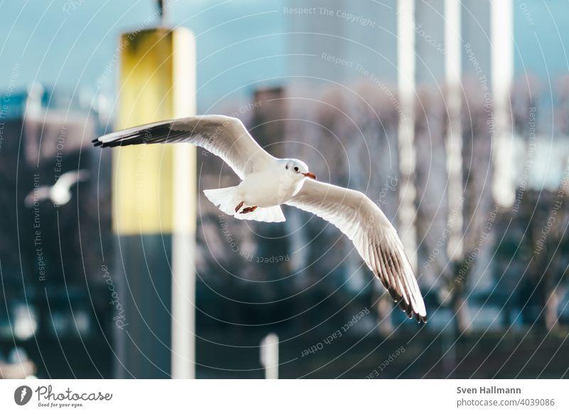 fliegende Möwe an der Weser Vogel Meer Himmel Tier Natur Außenaufnahme Wasser Tourismus Feder Flügel Freiheit blau Wildtier Farbfoto Möwenvögel Menschenleer