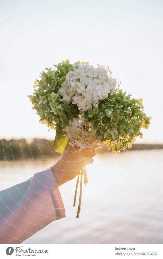 Nahaufnahme der weiblichen Hand hält Hortensienblüten in den Sonnenuntergang im Freien Blumenstrauß frisch Haufen zeigend geblümt Person schön Blumenhändler