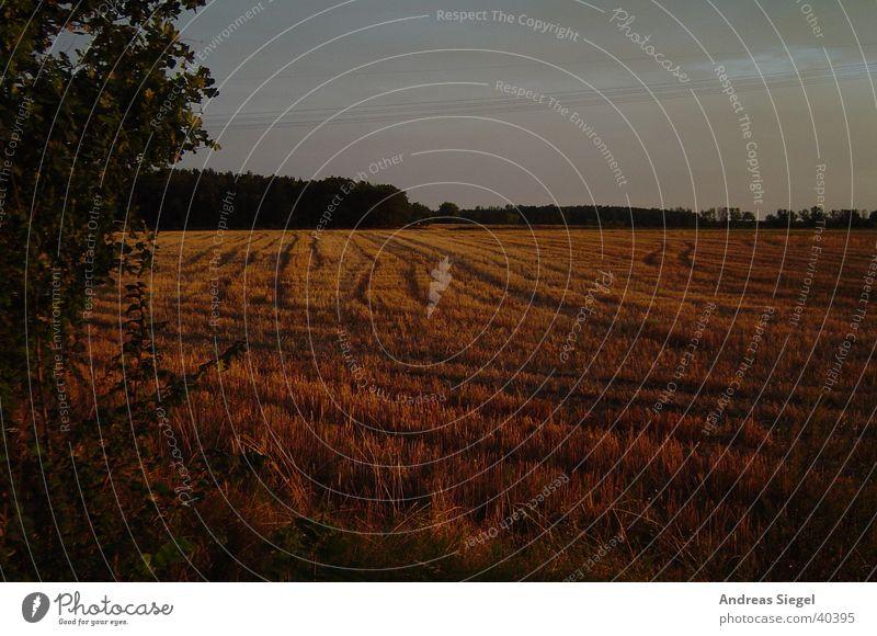 Feld am Abend Sonnenuntergang Waldrand Reifenspuren Baum Wildau Wolken Gras Herbst Natur Getreide Himmel