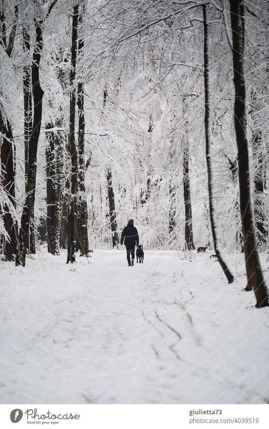 Spaziergang mit Hund durch verschneiten Winterwald Winterstimmung Winterspaziergang Wald Park Bäume Stadtpark Küchwald schneebedeckt kalt weiß Raureif Klima