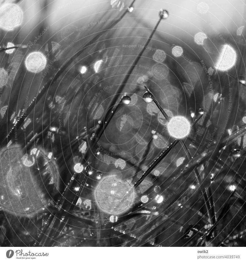 Feuchtwiese Froschperspektive Makroaufnahme Umwelt Tropfen ruhig Morgentau leuchten flimmern geheimnisvoll Rasen Grünpflanze glitzern Halme Textfreiraum oben
