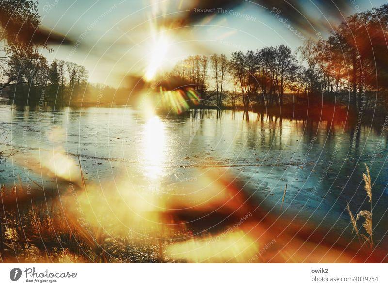 Durch die Blume Gegend gleißend mystisch Unschärfe Sonnenlicht Lichterscheinung Reflexion & Spiegelung Textfreiraum oben Textfreiraum Mitte Natur Baum Sträucher