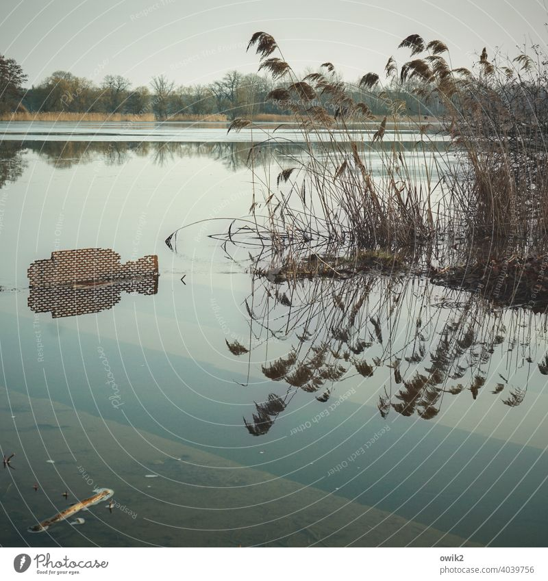 Hochwasser Seeufer Reflexion & Spiegelung Umwelt Schönes Wetter Natur friedlich Idylle Farbfoto Außenaufnahme ruhig Menschenleer Wasser Kontrast Totale