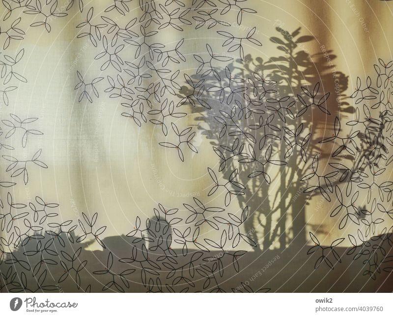 Vielschichtig Vorhang Fenster Fensterbrett Schatten Schattenspiel Muster Ordnung filigran Überlagerung Ebenen Pflanze Zimmerpflanze Christusdorn schemenhaft