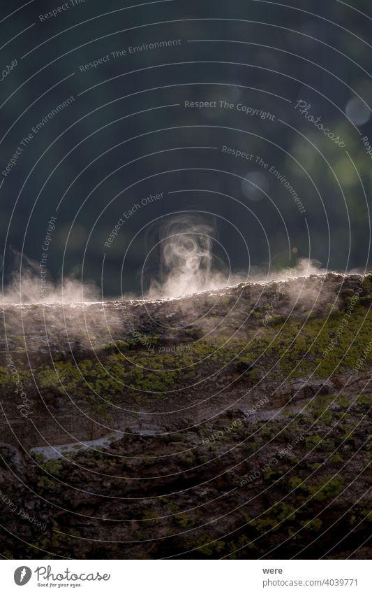 Baumstamm dampfend im Licht der Morgensonne Cloud Textfreiraum verdampfen Nebel aufheizen heiß Landschaft Natur niemand Verdunstung Dampfschwaden Dämpfen