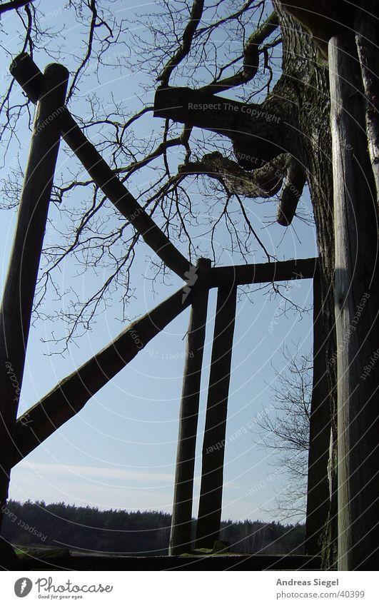 Alter Hochsitz Natur alt Baum Wald Holz Aussicht Jagd Jäger Wildau