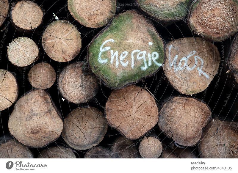 Stämme gefällter Bäume als Energieholz im Teutoburger Wald bei Oerlinghausen in Ostwestfalen-Lippe Baum Stamm Baumstamm Forst Waldwirtschaft Forstwirtschaft