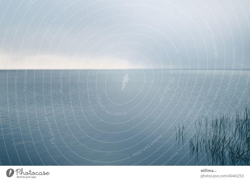 Am Bodden Wasser Schilf Ostsee Usedom Stille ruhig Erholung See Meer Medidation Natur Horizont Farbfoto grau Textfreiraum