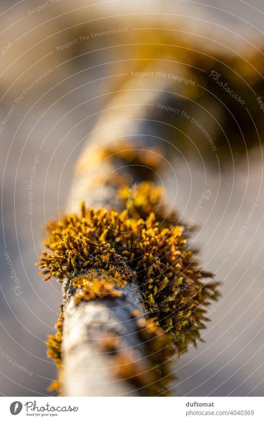 Moosbewuchs an einem Ast Natur natürlich Pflanze Flechte grün Umwelt Schwache Tiefenschärfe Stamm Baum Bewuchs draußen Wachstum Nahaufnahme Wald Außenaufnahme