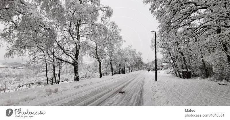 Verschneite Straße an einem klaren Wintertag schön gefroren Bäume Ansicht Baum Schneesturm Ast hell übersichtlich kalt Tag Dezember Fahrweg Feld Wald Frost