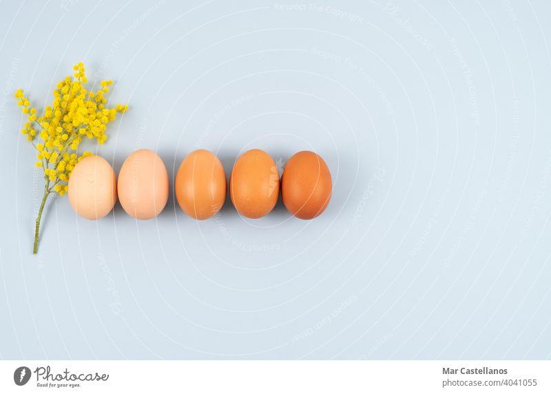 Eier in einer Reihe auf blauem Hintergrund mit gelben Blumen. Platz zum Kopieren. Ansicht von oben. Ostern Blauer Hintergrund Textfreiraum Draufsicht