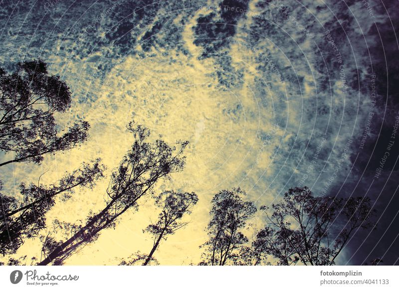 Baumwipfel vor dramatischem Wolkenhimmel Wolkenformation Wolkenfeld Bäume Himmel Wetter Wald Umwelt Natur Abendhimmel Sonnenuntergang Sonnenuntergangslicht
