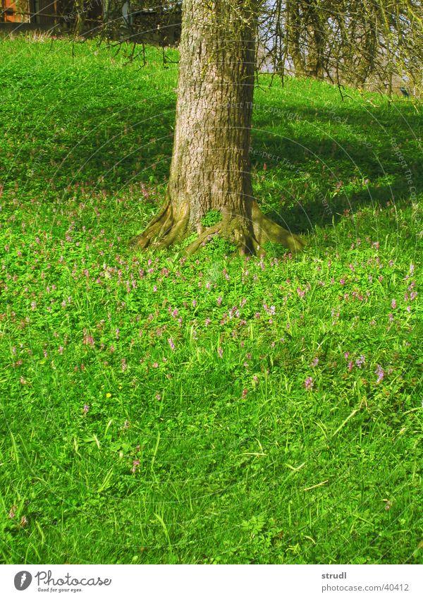 Frühling. Baum Blume grün Wiese Gras Frühling Baumstamm
