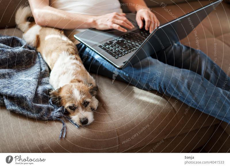 Mann mit einem Laptop und einem kleinen Hund auf einem Sofa laptop Homeoffice arbeiten Lifestyle Haustier Terrier Tier sitzen auf den knien Hygge Wohnzimmer