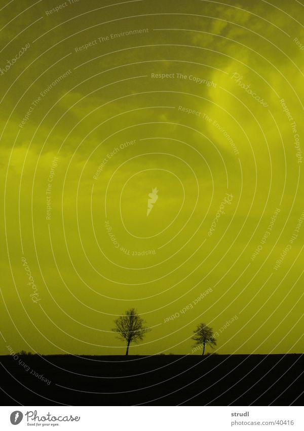 Baum. Natur Himmel Wolken gelb Landschaft Fantasygeschichte Moor Filter