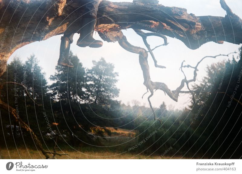Willste auch rauf? Mensch Natur Jugendliche Pflanze Sommer Baum Erholung Landschaft ruhig Wald Traurigkeit Spielen Junge Beine Fuß Luft