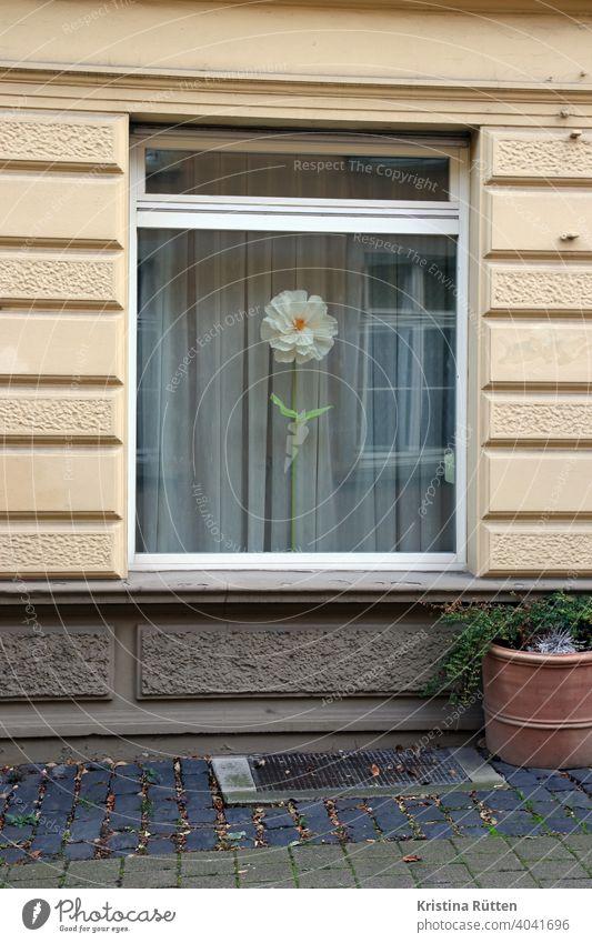 riesenblume im altbau fenster gardine papierblume stoffblume blüte künstlich groß einzeln deko dekorativ haus pflanzkübel blumentopf draußen fassade gebäude