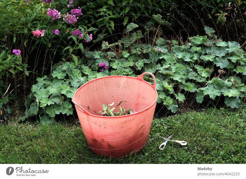 Roter Eimer aus transparentem Kunststoff mit Gartenabfällen und Schere in einem Bauerngarten in Rudersau bei Rottenbuch im Kreis Weilheim-Schongau in Oberbayern