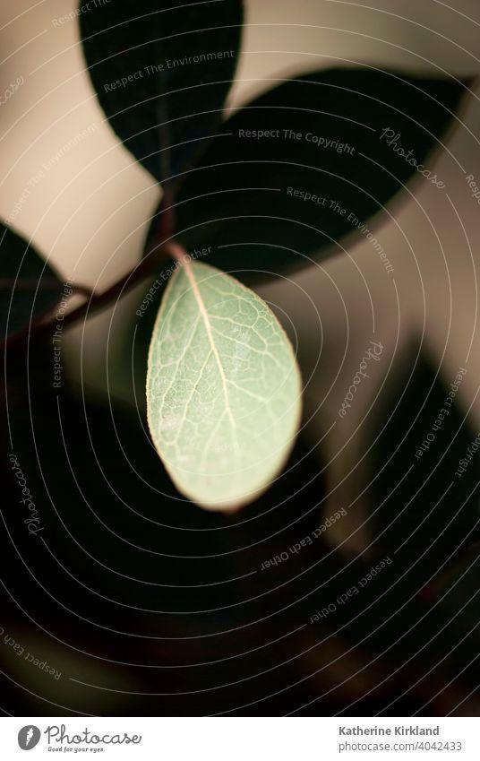 Blatt mit schwarzem und braunem Hintergrund Blätter Ast Baum Wald Wälder Waldgebiet grün Saison saisonbedingt Sommer Natur natürlich vertikal Laubwerk