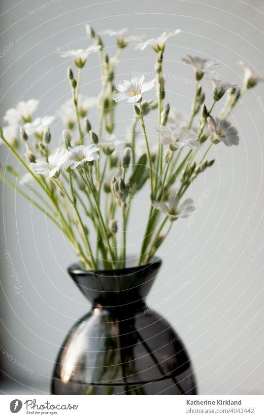 Weiße Blumen in Vase geblümt Objekt saisonbedingt im Innenbereich heimwärts Haus Textfreiraum horizontal natürlich Dekor Dekoration & Verzierung dekorativ Glas