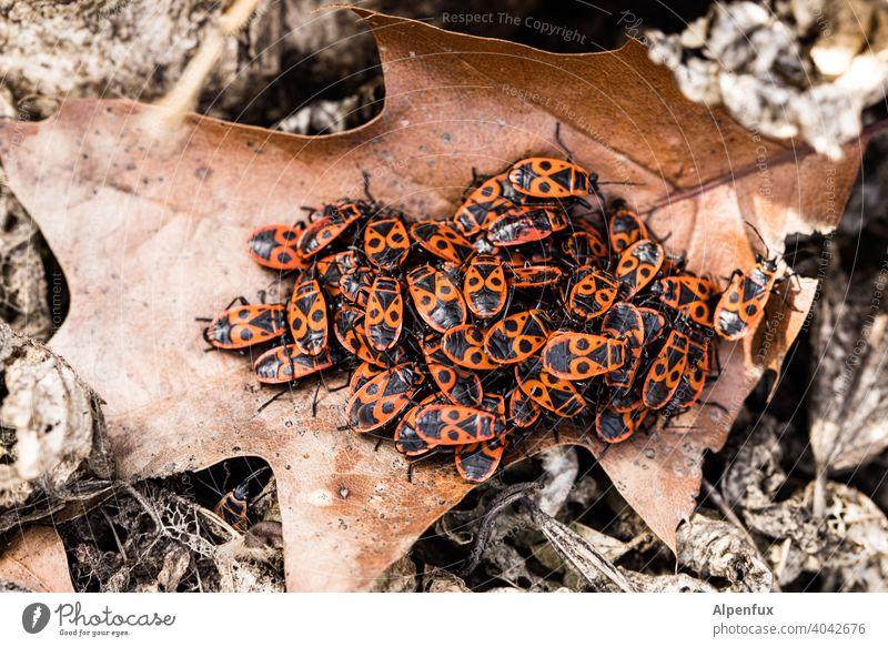 Frühling ! polyamorie Gruppensex Käfer viele Tier rot Makroaufnahme Insekt Nahaufnahme Farbfoto Außenaufnahme Sex Fortpflanzung Liebe