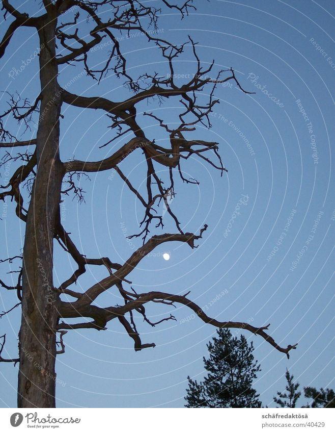 Mystik Baum Ast Mond mystisch Vollmond