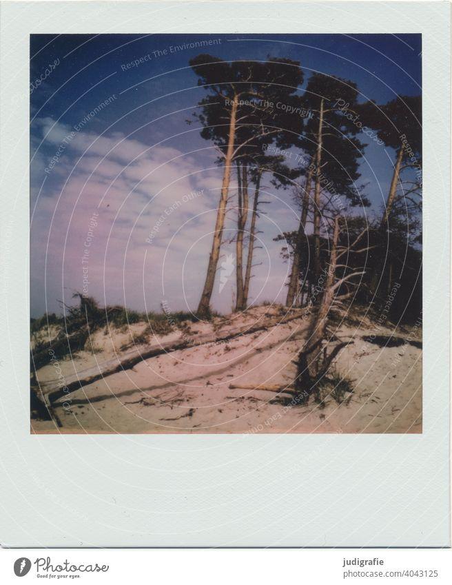 Weststrand auf Polaroid Landschaft Ostsee ostseeküste Darß Strand Düne Baum Himmel Sommer Urlaub Ferien & Urlaub & Reisen Fischland-Darß Wolken Meer Natur