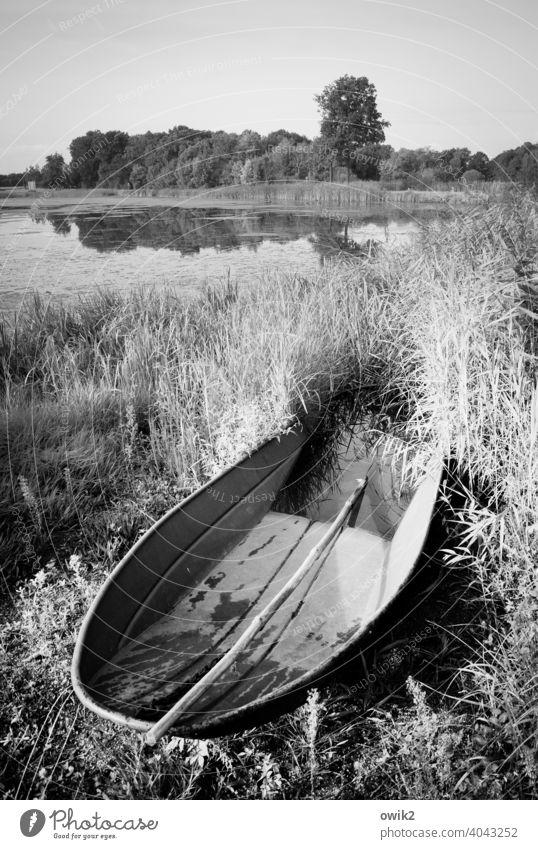 Schaluppe Fischerboot Kahn Metall einfach Fischteich leuchten Idylle Ferne glänzend Deutschland Lausitz See Seeufer Sträucher Gras Baum Schönes Wetter Pflanze