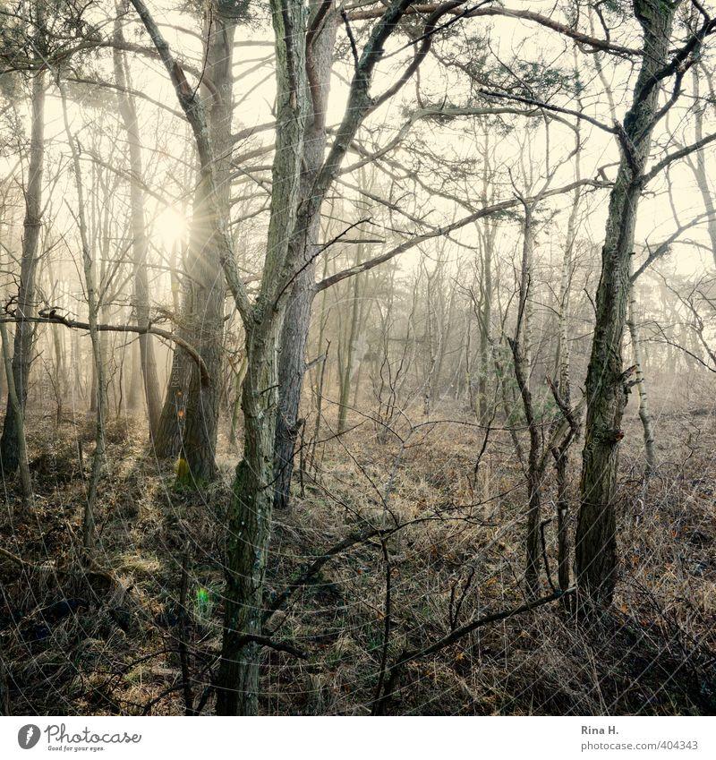 Morgens Natur Landschaft Frühling Nebel Baum Gras Zweige u. Äste Wald natürlich Gefühle Unterholz Quadrat mystisch kahl Wildnis Kunst Gedeckte Farben