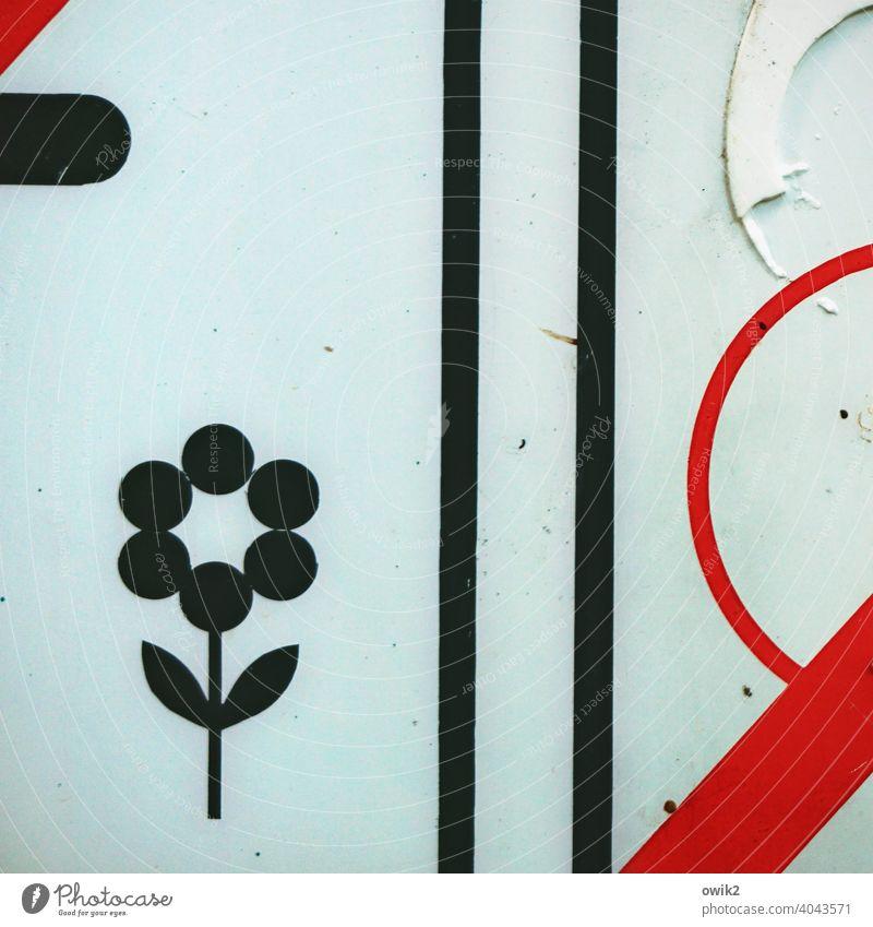 Blütenpracht Piktogramm Detailaufnahme Außenaufnahme Farbfoto abstrakt Totale schemenhaft Nahaufnahme Strukturen & Formen Zeichnung Linie
