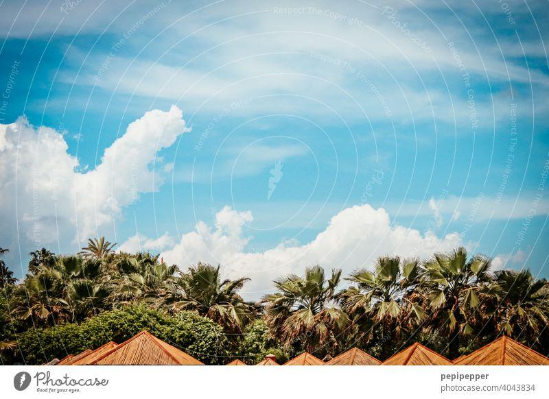 Sonnenschirme unter Palmen Palmenwedel Palmenstrand Palmendach sonnenschutz Außenaufnahme Farbfoto Ferien & Urlaub & Reisen Menschenleer Natur Tag Sommer