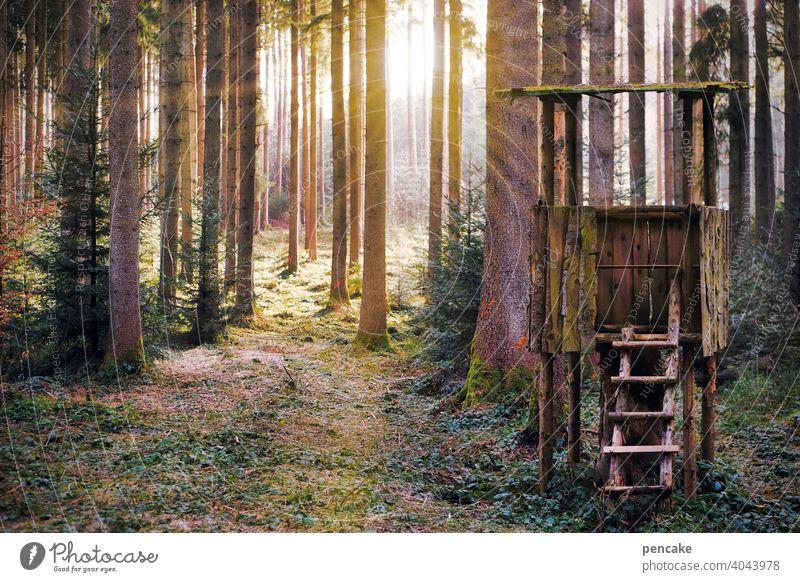 lichtmaschine Wald Sonne Sonnenstrahlen Bäume Licht Frühling Frühlingserwachen Hochstand beobachten Beobachtungsposten scheinen Sonnenschein Lichtmaschine
