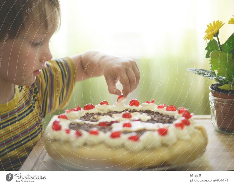 Naschzwerg Mensch Kind Essen Feste & Feiern Lebensmittel Kindheit Geburtstag Ernährung niedlich süß Süßwaren Kleinkind lecker Kuchen Sahne Torte