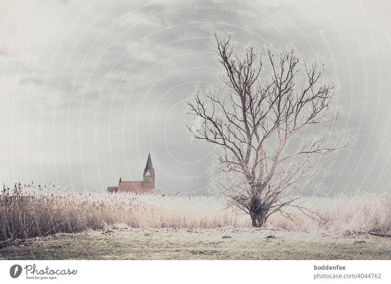 ein kahler Baum am Rande eines Schilfgürtels, im Hintergrund das Dach einer Kirche mit dem Kirchturm. Ein wolkenverhangener bleierner Himmel lässt durch eine Lücke Licht hindurch, das das Schilf und die Zweigspitzen des Baums gleißend erstrahlen lassen.