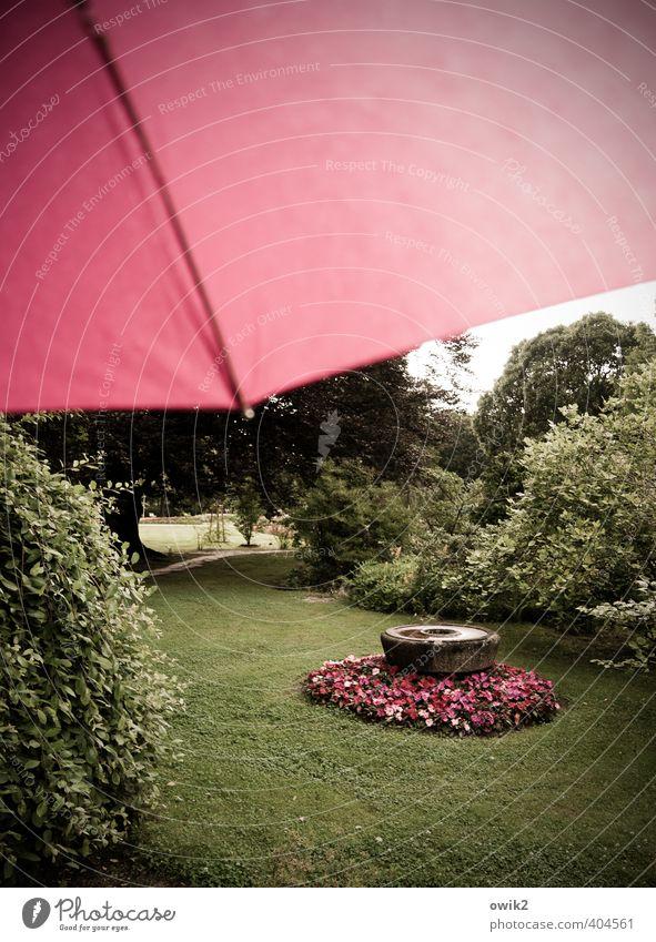 Bildschirm Garten Umwelt Natur Landschaft Pflanze Himmel Klima Wetter schlechtes Wetter Regen Blick schön grün rot Blume gestalten Rosengarten magenta