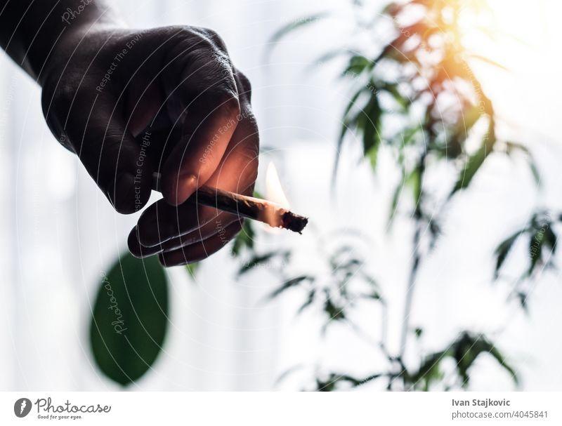 Hand des jungen Mannes hält brennenden Marihuana Joint gegen Cannabis Pflanze Klient Sucht Tabak Missbrauch Problematik Person Rauch Zigarette schlecht