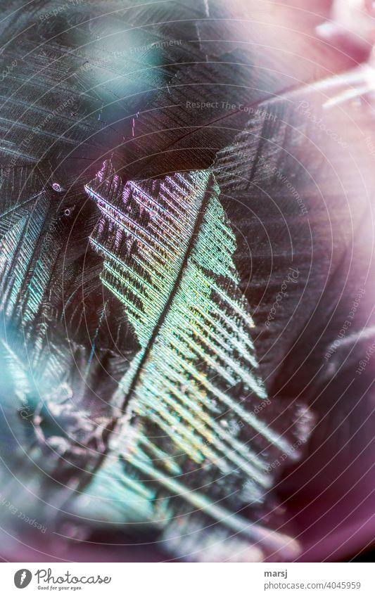 Schillernde und bunt gefiederte Eisprinzessin bizarr gefächert skurril Wandel & Veränderung Kristallstrukturen abstrakt authentisch ruhig Seifenblase elegant