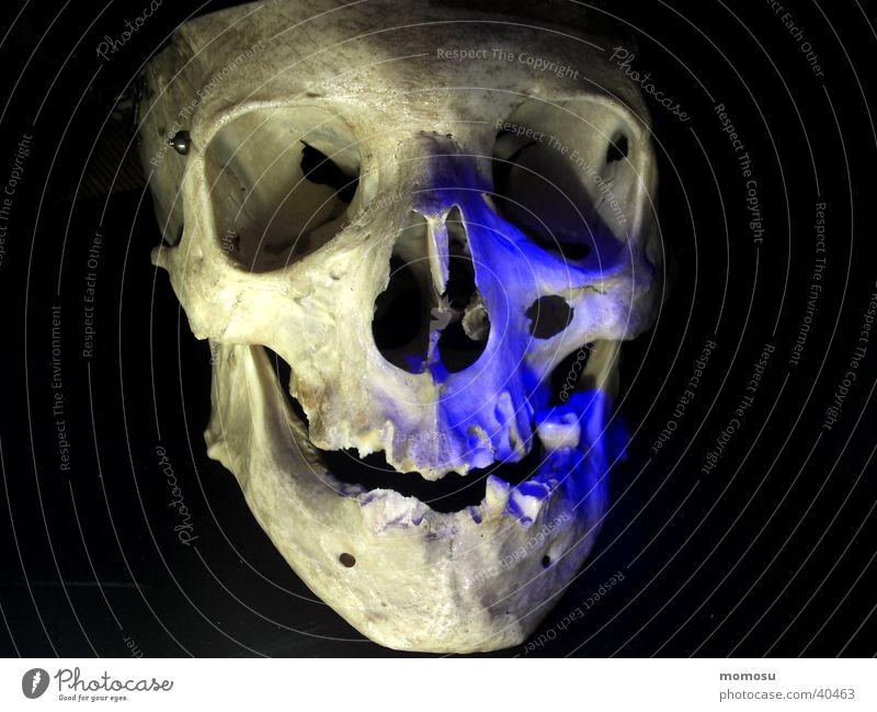 portrait Mensch Tod Kopf mystisch Skelett Schädel