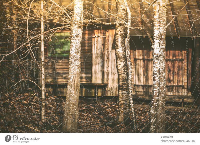 budenzauber Hütte Holzhütte Bude Budenzauber Abendlicht Wald Waldrand Versteck geheimnisvoll Birken Bäume Natur