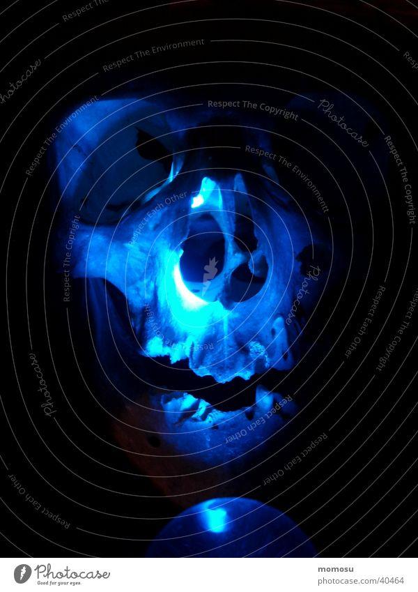 victor in blau mystisch Mensch Schädel Tod abgemagert