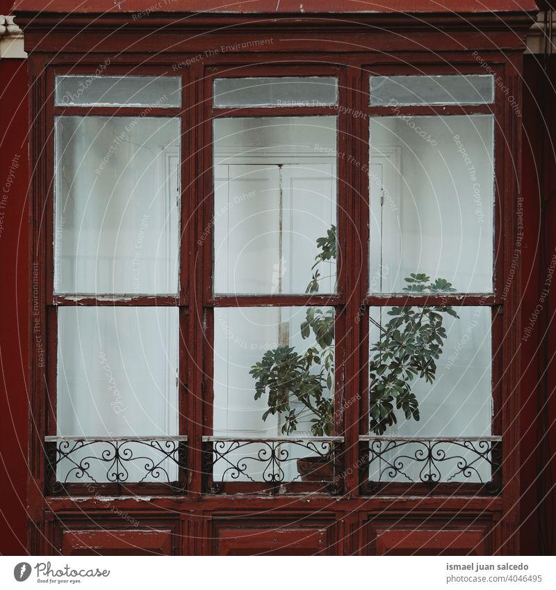 Blumenpflanze auf dem Balkon des Hauses Pflanze Blumentopf Topfpflanze Fenster Fassade heimwärts Architektur hölzern Außenaufnahme Farbfoto Wand Gebäude