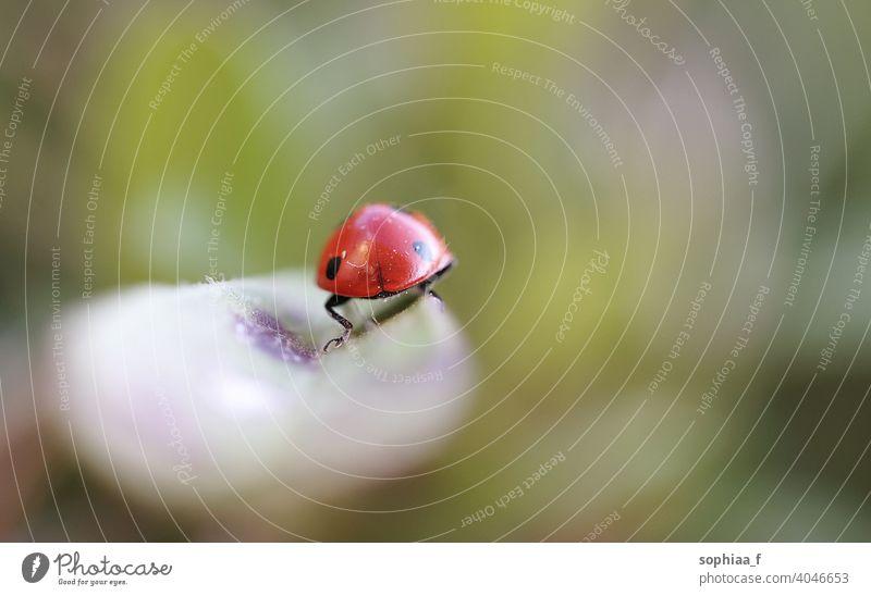 Auf Wiedersehen - Makroaufnahme des Marienkäfers von hinten beim Weggehen und Verlassen Abschied verlassend Verabschiedung Glück Blatt abschließen Hintern