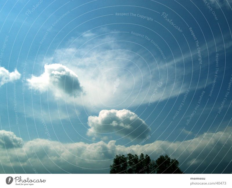 viel himmel Wolken Stimmung Feld Himmel blau Wetter