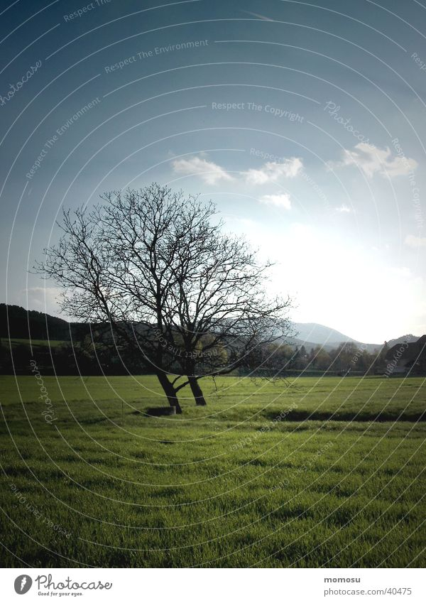 zweisamkeit Himmel Baum Wolken Wiese Gras Frühling Österreich