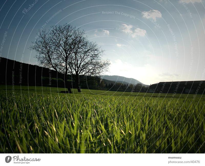 wenn das gras schlafen geht Himmel Baum Wiese Gras Stimmung
